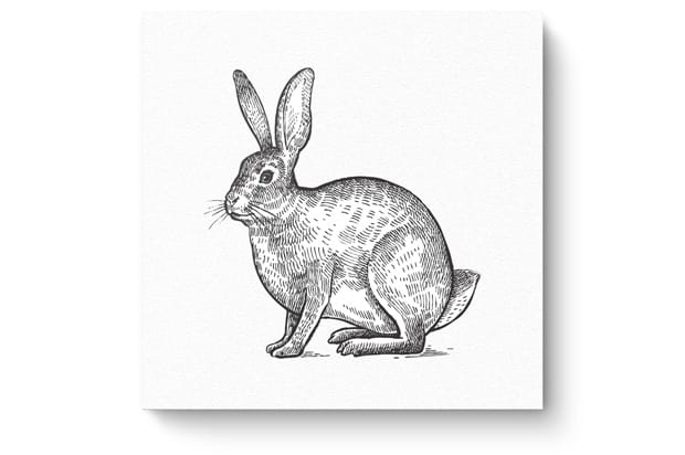 Animal drawing3